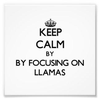 Keep calm by focusing on Llamas Photograph