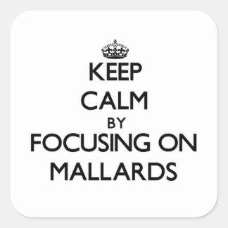 Keep Calm by focusing on Mallards Square Sticker