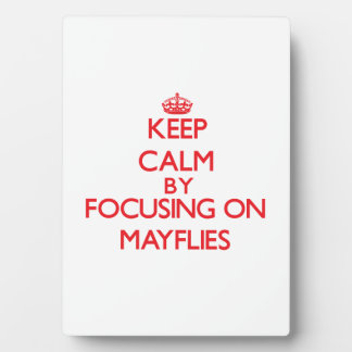 Keep calm by focusing on Mayflies Plaques