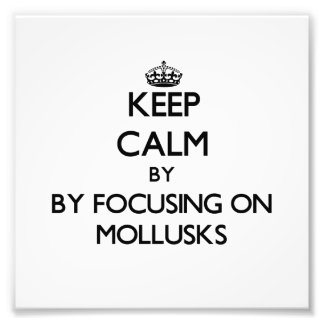 Keep calm by focusing on Mollusks Photo Print