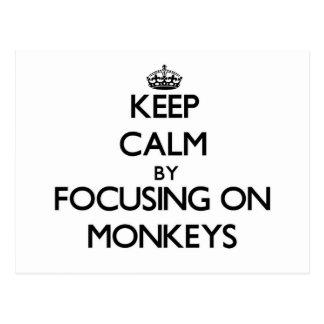Keep Calm by focusing on Monkeys Postcard