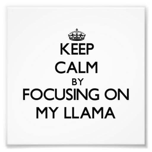 Keep Calm by focusing on My Llama Photo