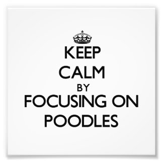 Keep Calm by focusing on Poodles Photographic Print