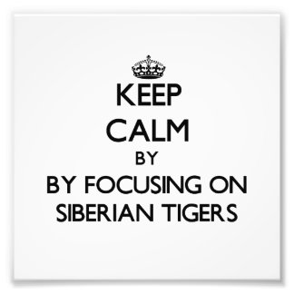 Keep calm by focusing on Siberian Tigers Photo Print