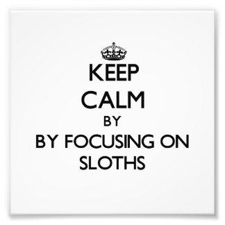 Keep calm by focusing on Sloths Photo Art