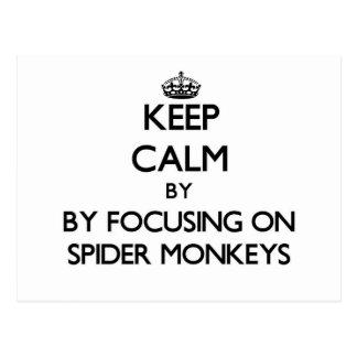 Keep calm by focusing on Spider Monkeys Postcard