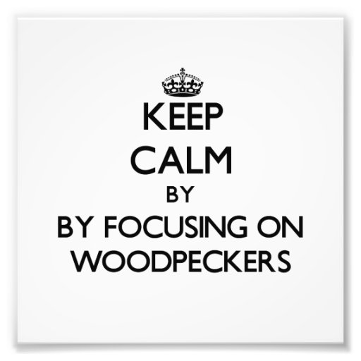 Keep calm by focusing on Woodpeckers Photographic Print