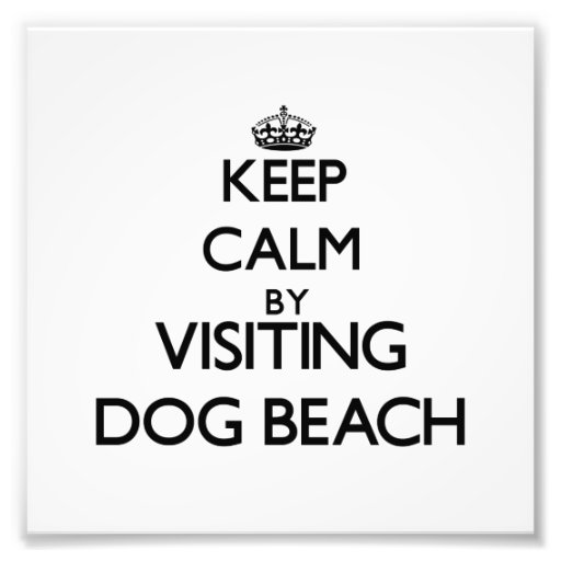 Keep calm by visiting Dog Beach Florida Photo