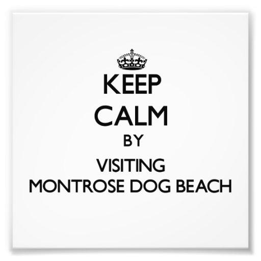 Keep calm by visiting Montrose Dog Beach Illinois Photo Art