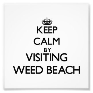 Keep calm by visiting Weed Beach Connecticut Photograph