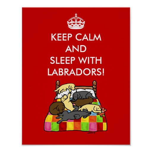 Keep Calm Labradors Poster