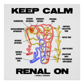 Keep Calm Renal On (Kidney Nephron) Poster