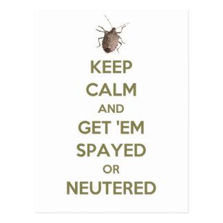 Keep Calm Stink Bug Postcard
