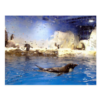 Keep Your Head Up/Cute Swimming Penguin Postcard