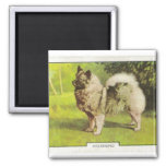 Keeshond 2 Inch Square Magnet