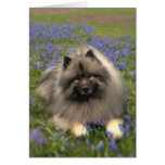Keeshond and Flowers Stationery Note Card