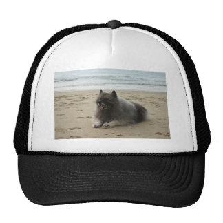 keeshond en beach.png gorras de camionero