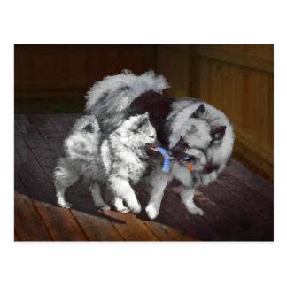 Keeshond Playtime Painting - Cute Original Dog Art Postcard
