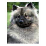 Keeshond Post Cards