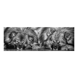"""Keeshond poster titled """"Two Peas in a Pod"""""""