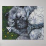 keeshond pup art print