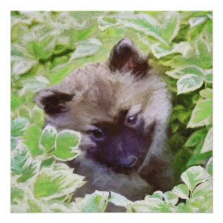 Keeshond Puppy (Brutus) Poster