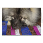 Keeshond Show Puppy Greeting Card