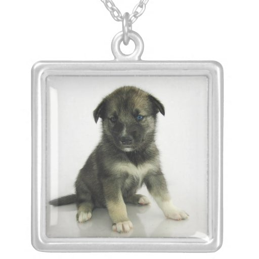 Keeshond Siberian Husky Crossbreed Puppy Necklaces