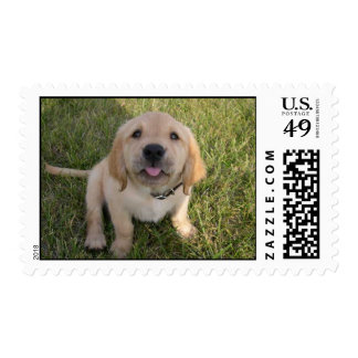 Kelly Berry Postage Stamp