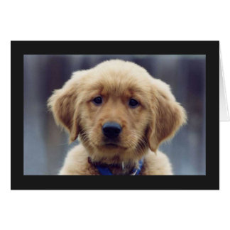 Kelly Golden Retriever Blank Greeting Card