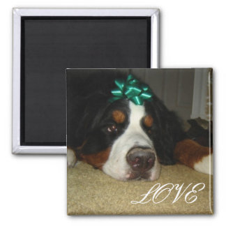 Kelly's Bernese Mountain Dogs 2 Inch Square Magnet