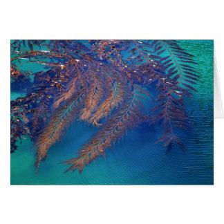 Kelp, Point Lobos, Carmel, CA Card