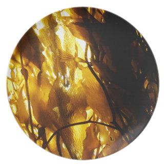 Kelp Shadows 3 Dinner Plates