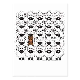 Kelpie australiano en las ovejas postales