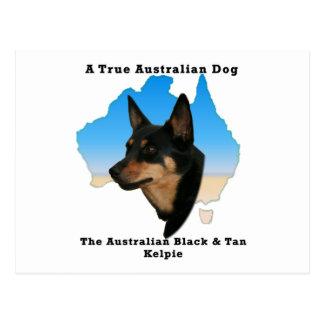 Kelpie negro y del moreno australiano con el mapa postal