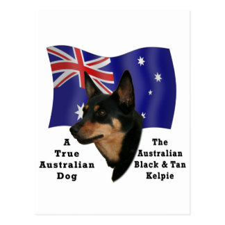 Kelpie negro y del moreno australiano con la postal