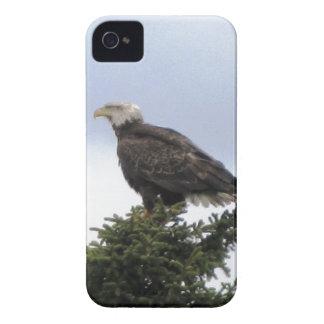 Kenai Alaska Bald Eagle Blackberry Bold Case