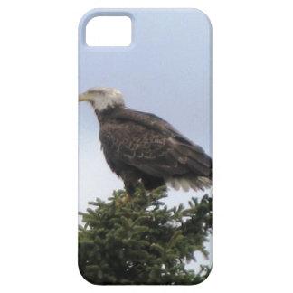 Kenai Alaska Bald Eagle Iphone Custom Casemate ID iPhone 5 Cases