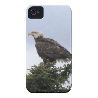 Kenai Alaska Bald Eagle Iphone Custom Casemate ID iPhone 4 Case-Mate Case