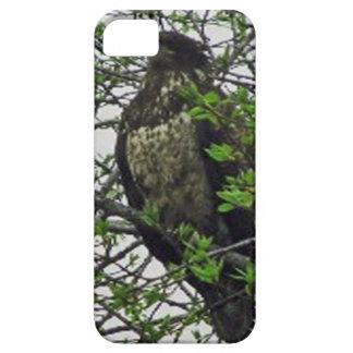 Kenai Alaska Golden Eagle Iphone Case iPhone 5 Cover