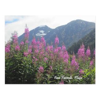 Kenai Peninsula, Alaska Postcard