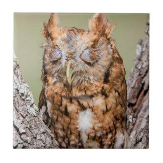 Kendall County, Texas. Eastern Screech-Owl 1 Ceramic Tile