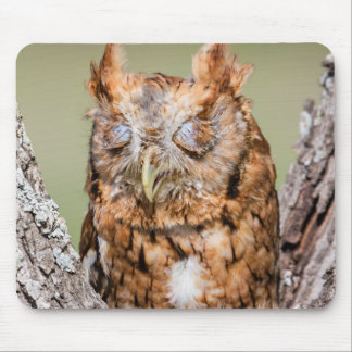 Kendall County, Texas. Eastern Screech-Owl 1 Mouse Pad