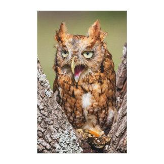 Kendall County, Texas. Eastern Screech-Owl 2 Canvas Print