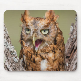 Kendall County, Texas. Eastern Screech-Owl 2 Mouse Pad