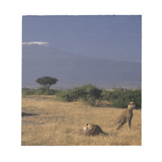 Kenia: Amboseli, dos guepardos ('Acinonyx Blocs De Notas