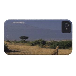 Kenia: Amboseli, dos guepardos ('Acinonyx iPhone 4 Case-Mate Funda