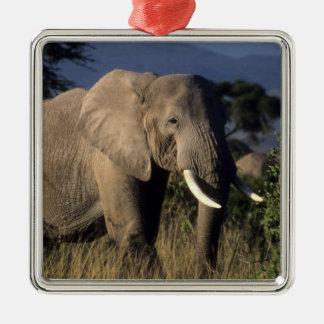 Kenia Amboseli elefante africano masculino Ornamentos Para Reyes Magos