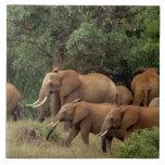 Kenia: El parque nacional del este de Tsavo, reúne Teja Cerámica