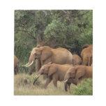 Kenia: El parque nacional del este de Tsavo, reúne Blocs De Notas